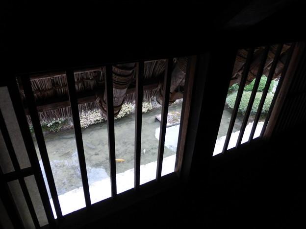 神田家の池