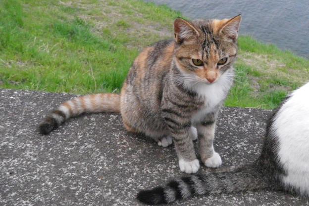 ガードマン猫2