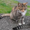 Photos: ガードマン猫2