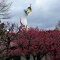 開花を見つめる塔