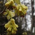 緑化植物園の花-5
