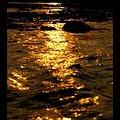 Photos: 金 ~金色の流れ~