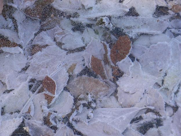 氷中の落ち葉
