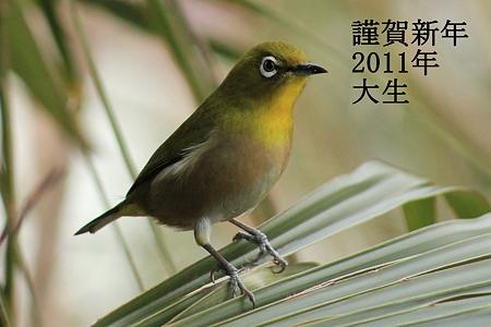 年賀状2011-2