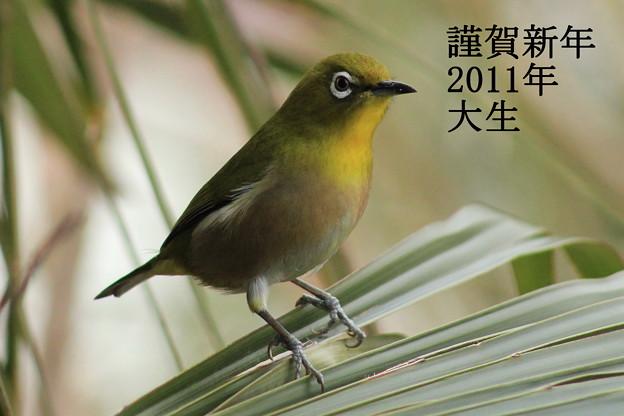 写真: 年賀状2011-2