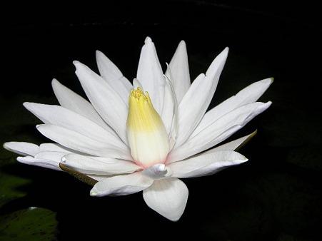 2011/08/15 004