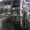 写真: 水車:針江の生水02