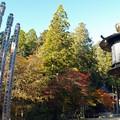 写真: 高野山紅葉23