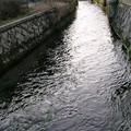 針江の生水11