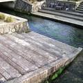 針江の生水09