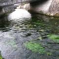 Photos: 針江の生水13