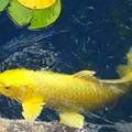 Photos: GOLD 徳川庭園