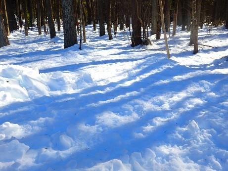 山梨県忍野村の積雪^^