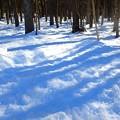写真: 山梨県忍野村の積雪^^