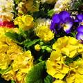 写真: 乱れ咲き・・