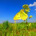 写真: 春が来た!