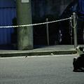Photos: 夜の野良猫2