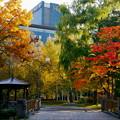 中島公園の秋 02