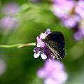 写真: 今年初めての蝶