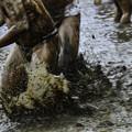 Photos: 和良比どろんこ祭り「騎馬戦」