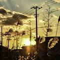 写真: 工場街の落日
