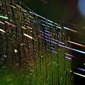 写真: 光彩「蜘蛛の巣」