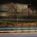 夜桜4 (再アップ)