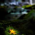 写真: 秋を探して