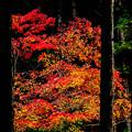 写真: ひっそりと紅く染まる