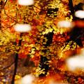 写真: 秋に魅せられ