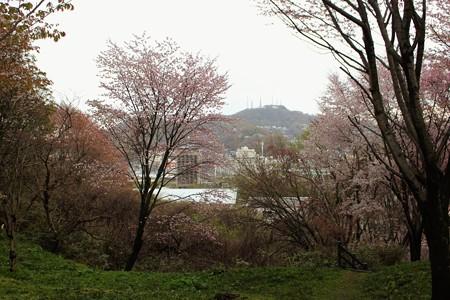 室蘭・入江運動公園にて (17)