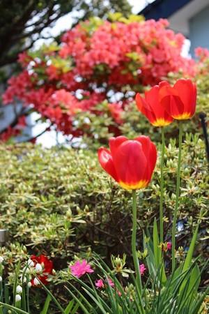 春の花々 (4) (733x1100)