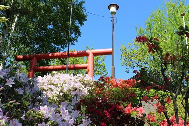 本輪西八幡神社 (6)
