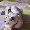 Photos: ある日のムギ(=^o^=) (2)