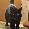 黒猫のクロ(=^o^=) (2)
