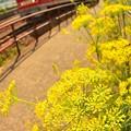 写真: レッドサンダーと黄色い花