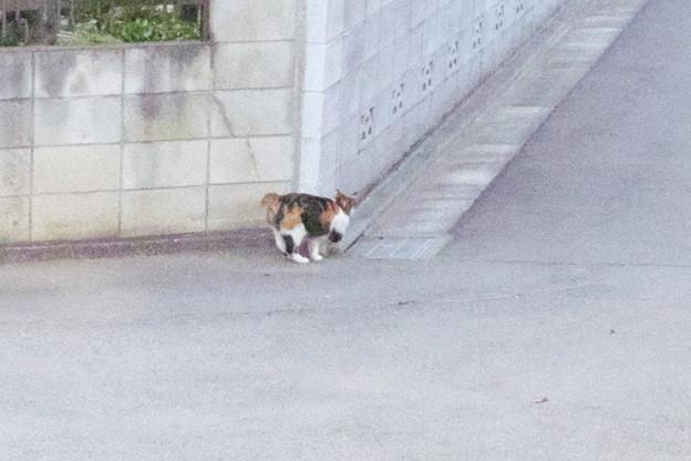 気になっていた三毛猫さん