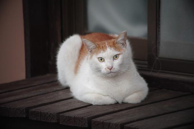 縁側の猫さん