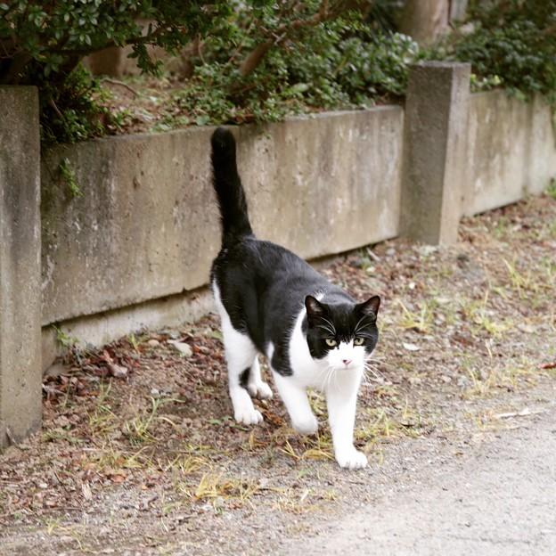 シゲ子さんちにいる白黒猫