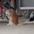 写真: 吉田さんちの黒猫さん