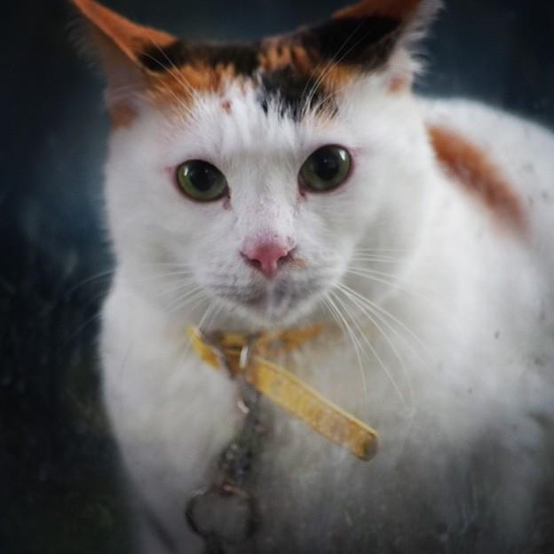 Photos: 十五夜猫