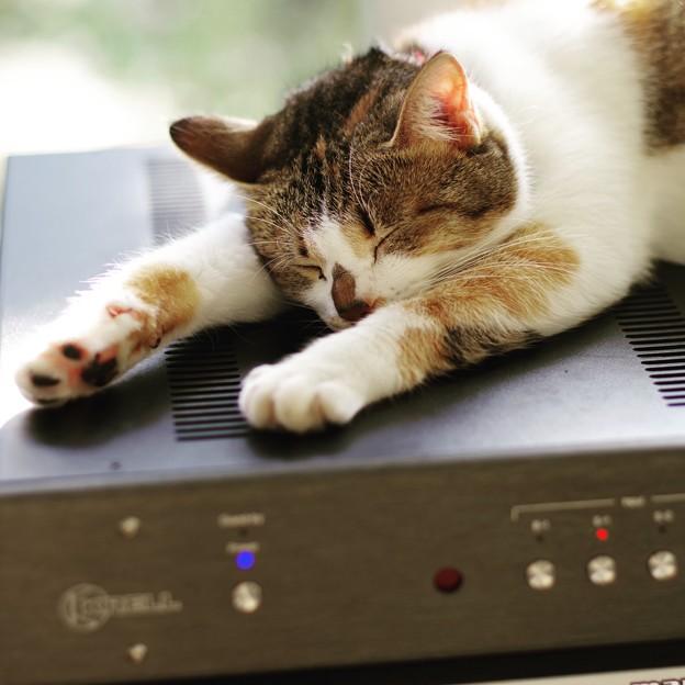 Photos: この猫は・・・