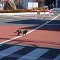 写真: 本川越駅前ロータリー