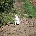 Photos: 散歩道の可愛い猫さん