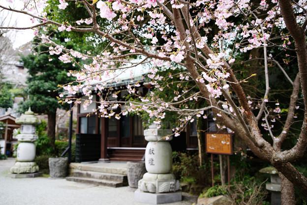 城願寺本堂