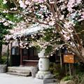 写真: 城願寺本堂