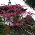 写真: 城願寺七騎堂