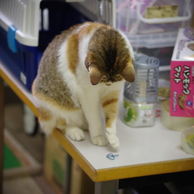 写真: 遊ぼっと(^^)
