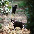 月曜日の猫歩き