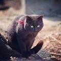 写真: 初めて会う黒猫さん